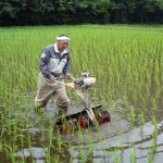 自然栽培田の除草