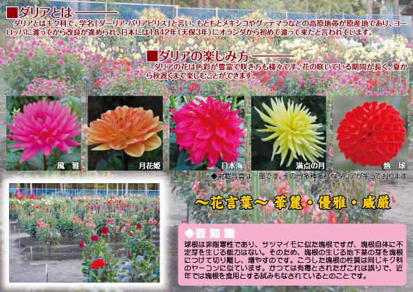 ひばり野ダリア園のパンフレット2014年版