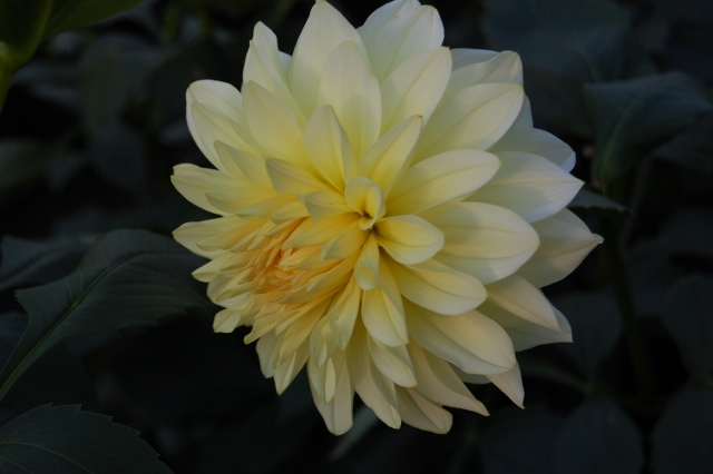 262 レモンカスタード (640x426)